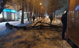 Управляющие компании начинают проверять состояние деревьев на придомовых территориях