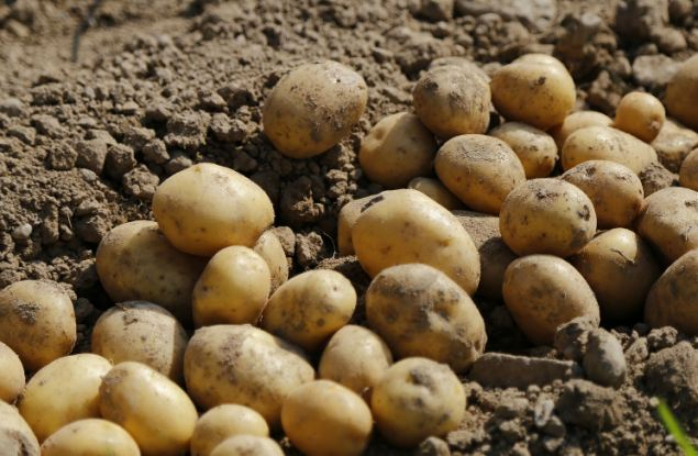 Какие рекорды поставили кировские аграрии по итогам сезона?