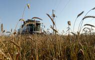 Кировские сельхозпредприятия не получат компенсацию за погибший урожай