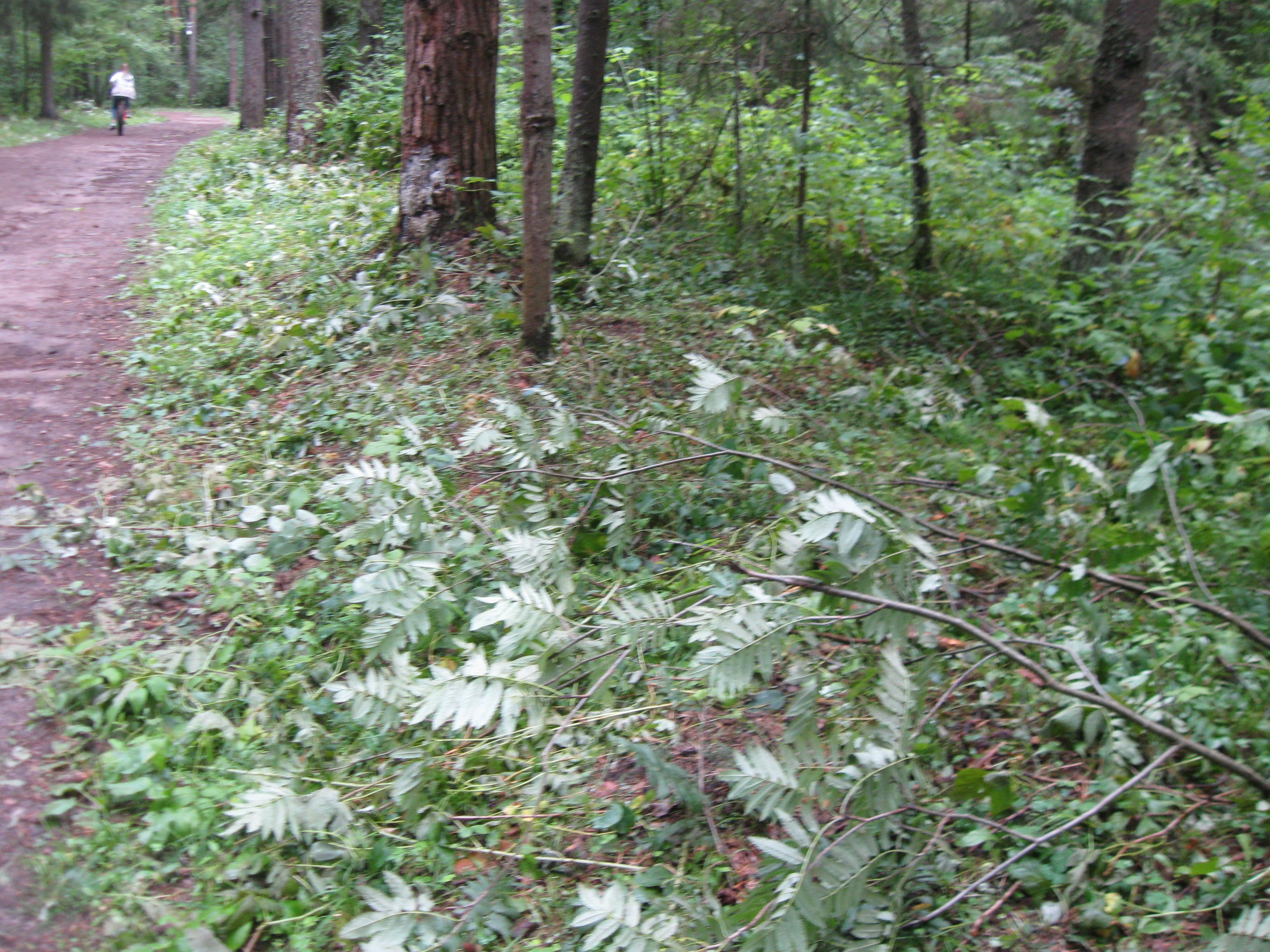 В Порошино проведут обследование лесного массива