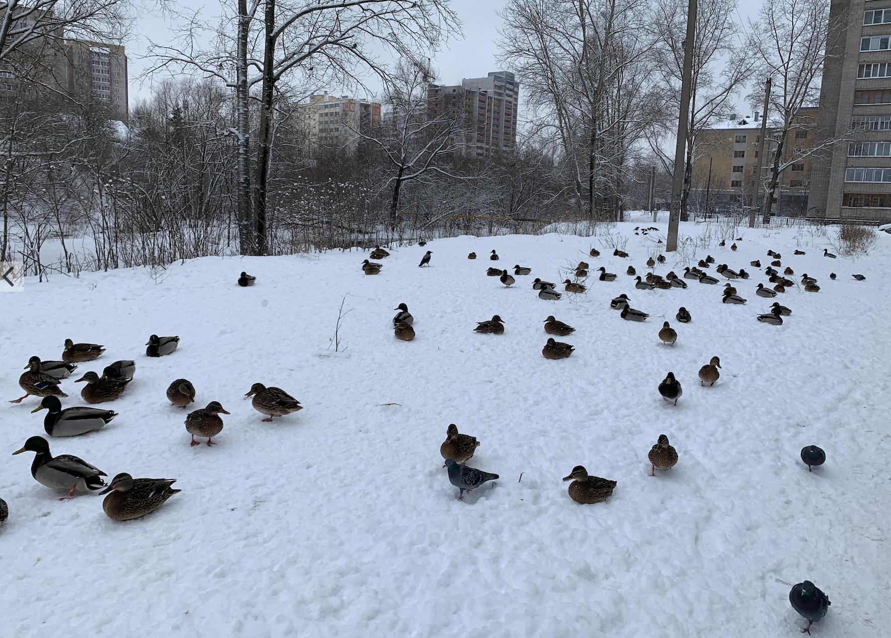 Кировчан ждут морозные выходные