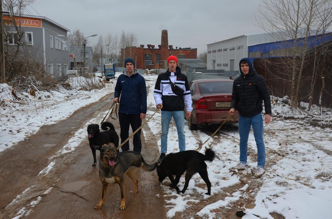 Хоккеисты «Родины» помогли приюту для бездомных собак