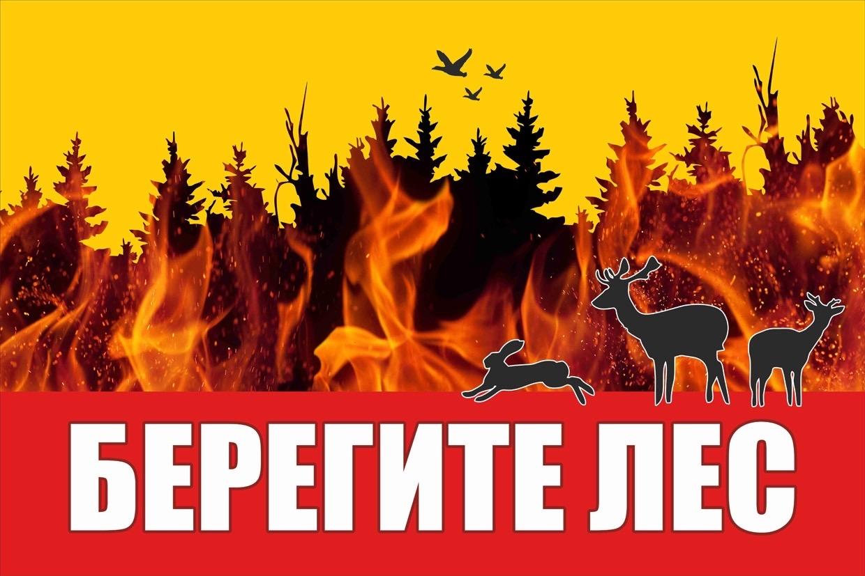 О конкурсе «Берегите лес от пожара»