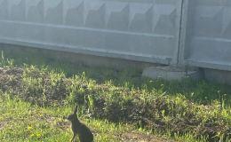 Кировчане обеспокоены судьбой зайца с завода Сельмаш