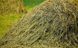 Кировский бизнесмен продает «святое» сено с поляны в Великорецком, где в этом году проходил молебен
