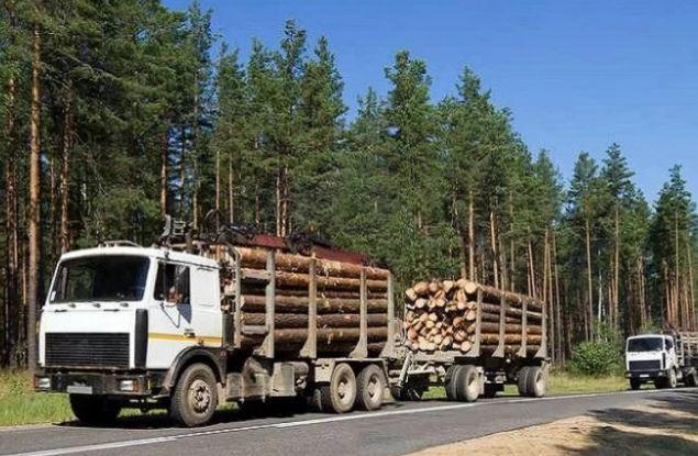 Кировский лесоэкспортер обманул таможню почти на 5 миллионов рублей