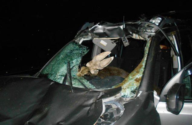 В Кировской области в аварию попали видные члены местной ЛДПР