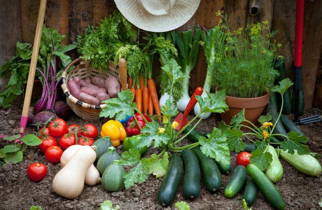 Снижение доходов вызвало рост интереса кировчан к садоводству