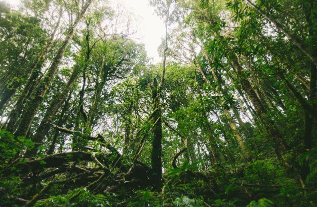 Принципы экологии в деревообрабатывающей промышленности