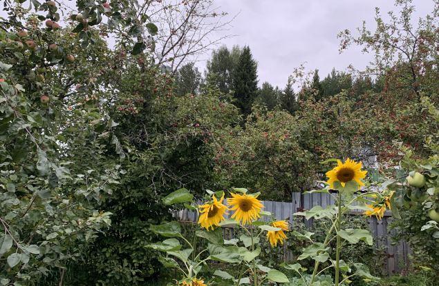 Кировчанам обещают неделю гроз
