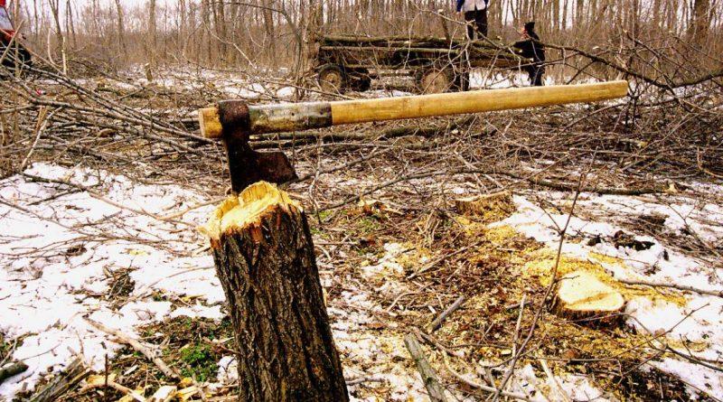В Кировской области будут судить организатора незаконной рубки леса