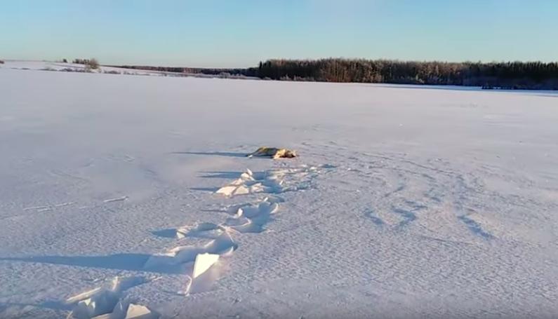 Депутату заксобрания Кировской области убившему двух собак вынесен обвинительный приговор