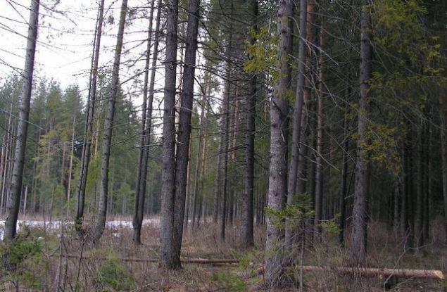 Кировская область первая по количеству коррупционных преступлений в лесной сфере
