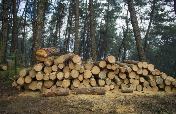 В Кировской области выявлена очередная незаконная вырубка леса
