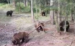Типичная русская среда
