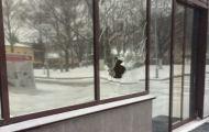 В здании Правительства Кировской области разбили еще одно окно