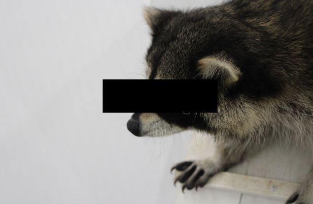 """В ТЦ """"Green Haus"""" два енота сбежали из вольера и совершили убийство кроликов"""