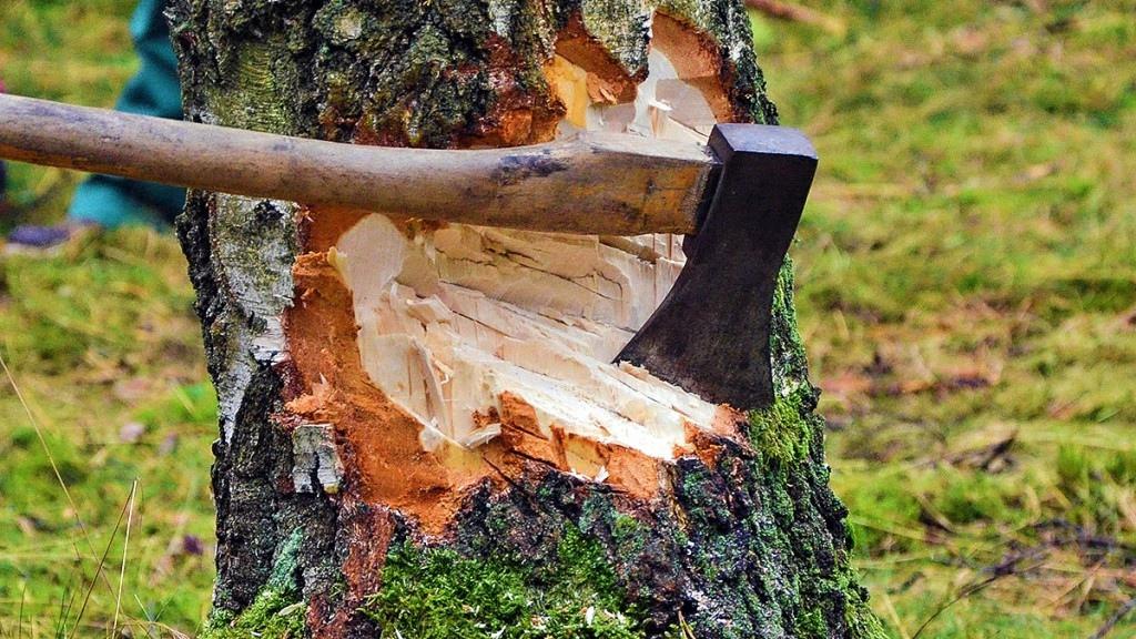 В Порошино незаконно вырубили 60 кубометров лесных насаждений
