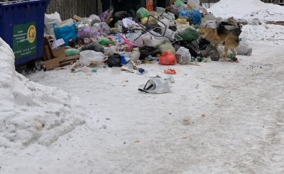 Из-за мусорных завалов под окнами Правительства области бегают стаи бездомных собак