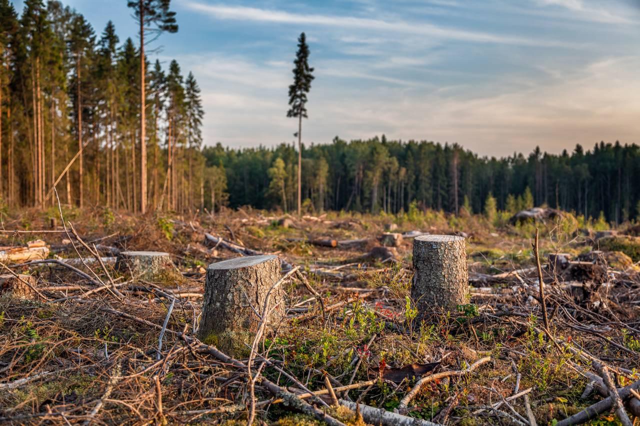 В Кировской области выявлен факт незаконной вырубки леса