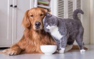 Прокурор Кировской области внёс протест на правила содержания домашних животных