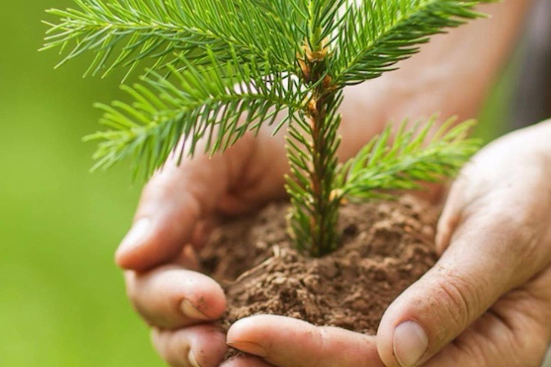 В Кировской области восстановят 38 тысяч гектаров леса