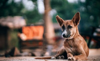 Усыпление бездомных животных. Необходимая, или живодерская мера?