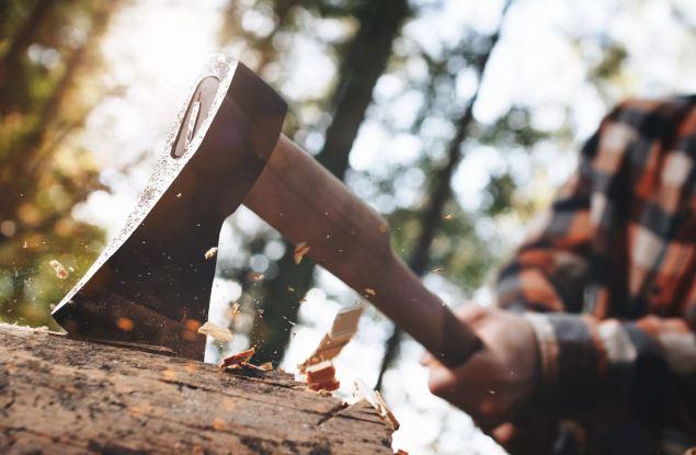 На «Тропе здоровья» незаконно вырубили 60 кубометров древесины