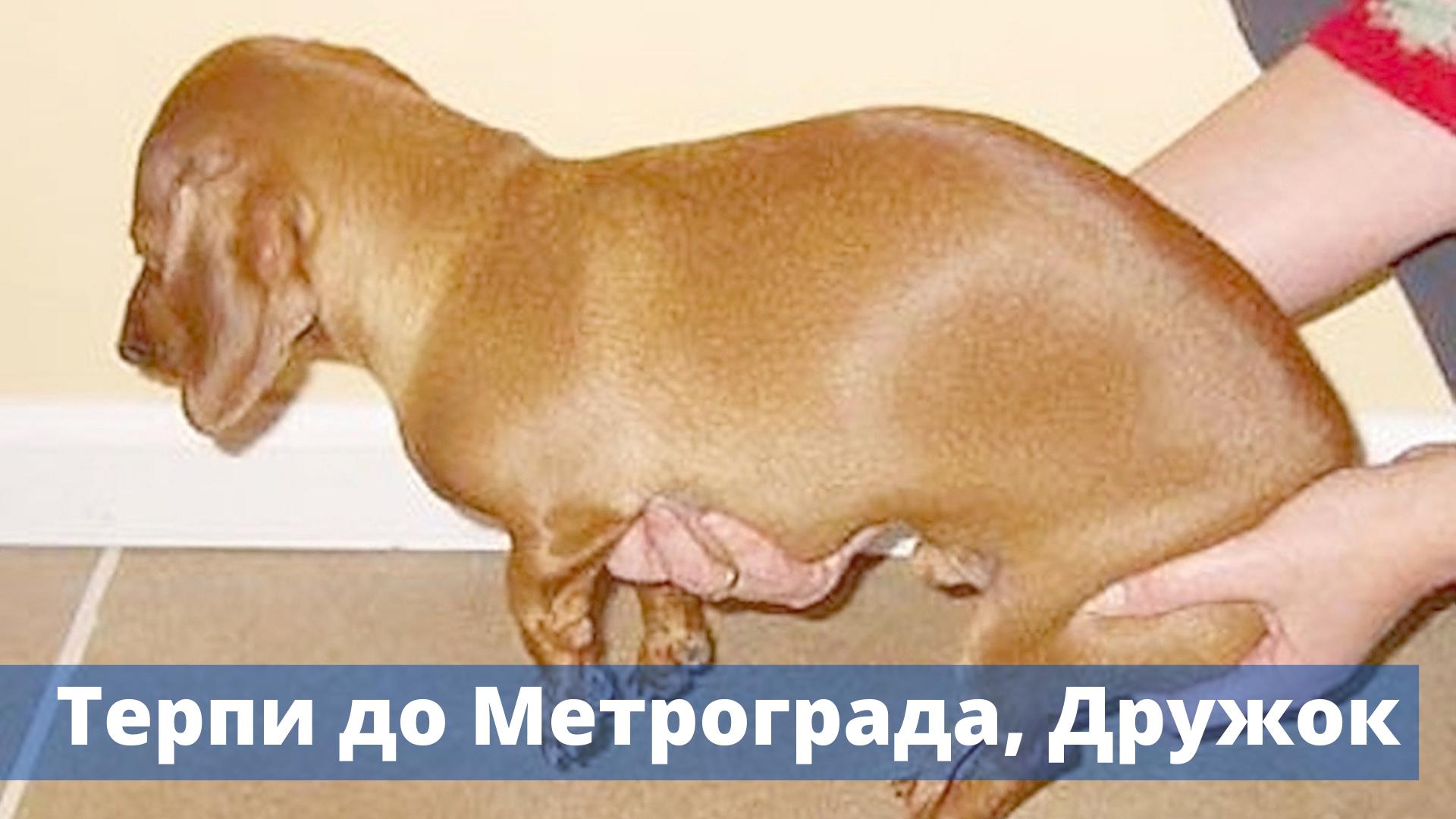 """""""Гуляй - не хочу"""". В Кирове всего два места для законного выгула собак"""
