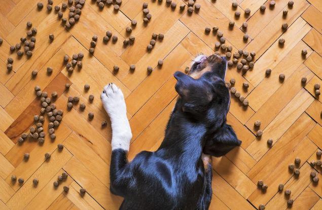 Dog friendly в Кирове: на карте города появились кафе, куда пускают с собакой