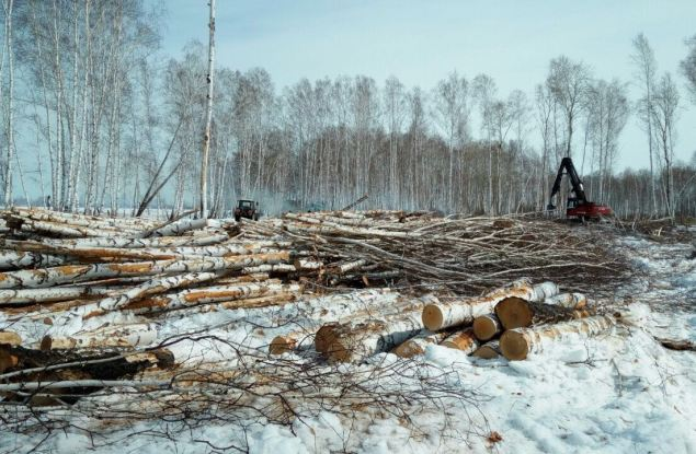 В Кирове незаконно вырубили лес