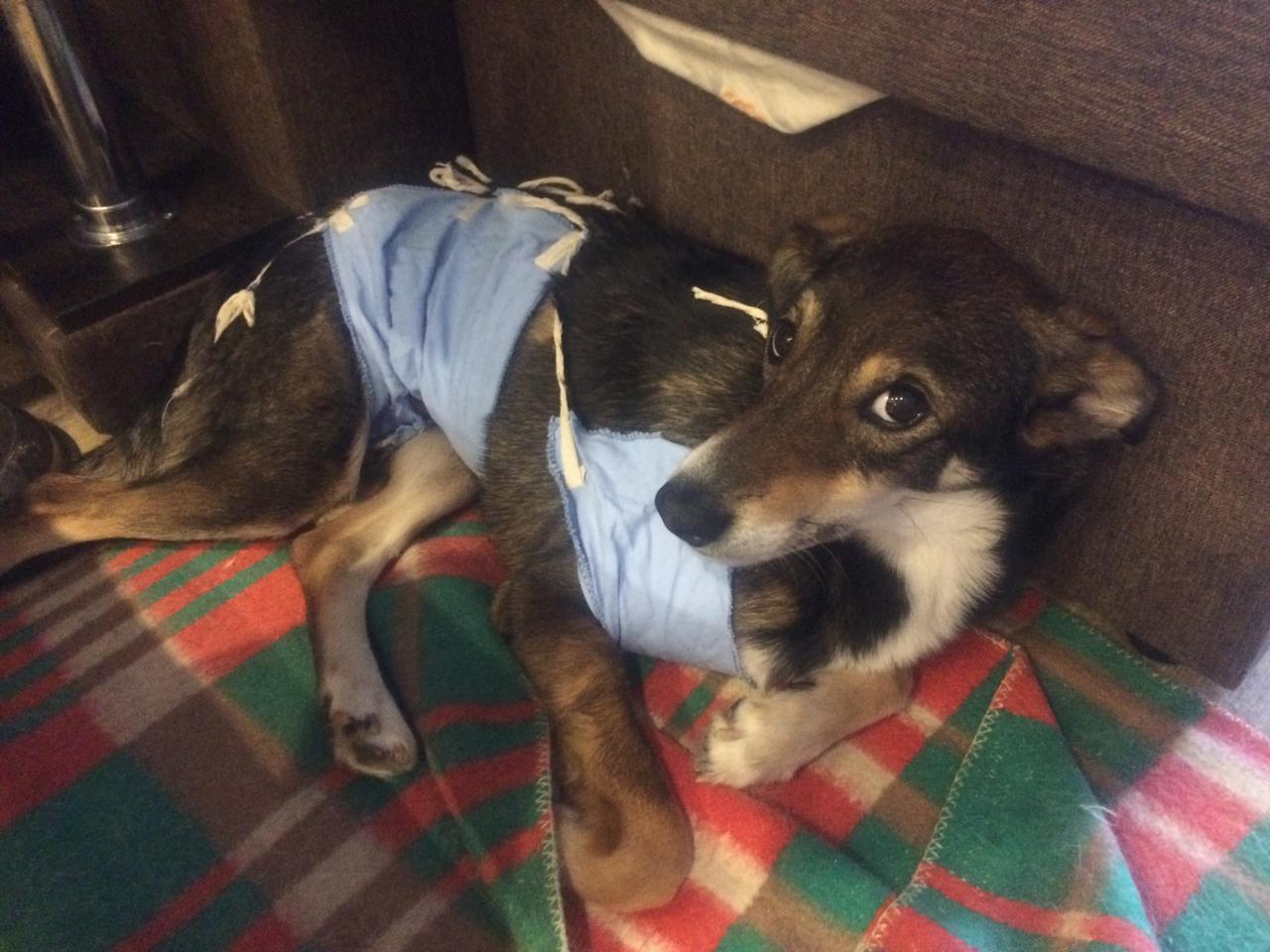 В Кирове растет активность собаконенавистников?