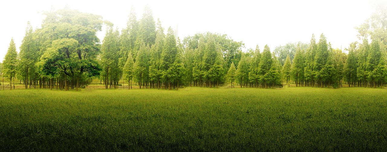 Финансового директора крупной кировской деревообрабатывающей компании подозревают в экономическом преступлении