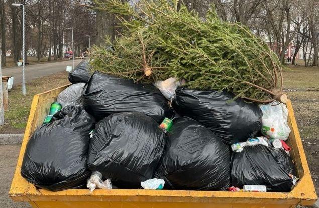 У Филармонии спиливают ели? Кировчан обеспокоили деревья в мусорном баке