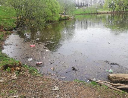 Будут ли чистить пруд у Диорамы?