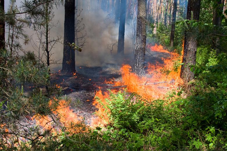 В населенных пунктах Кирова введен особый противопожарный режим