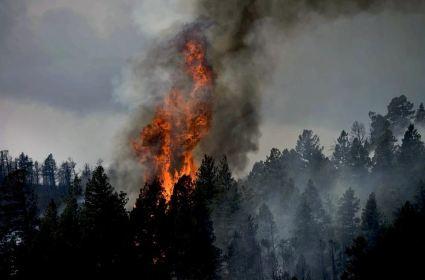 В Кировской области сгорело 17 гектаров леса