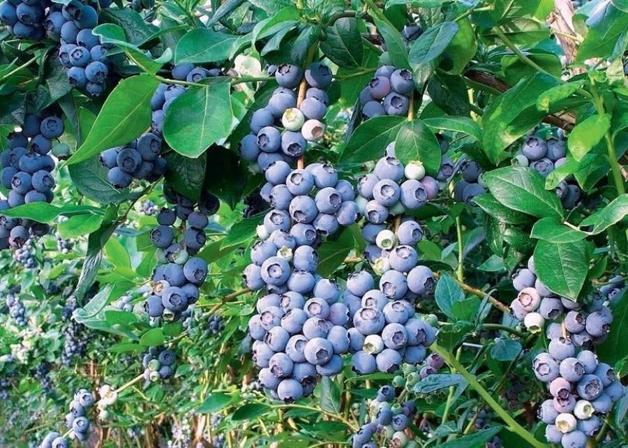 Как вырастить плодово-ягодный сад