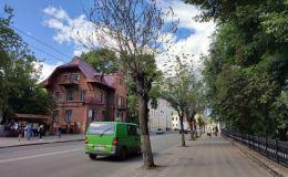 В Кирове могут снести деревья, растущие вдоль улицы Карла Маркса