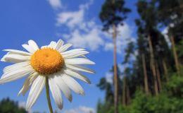 На выходных кировчан ждет жаркая и солнечная погода