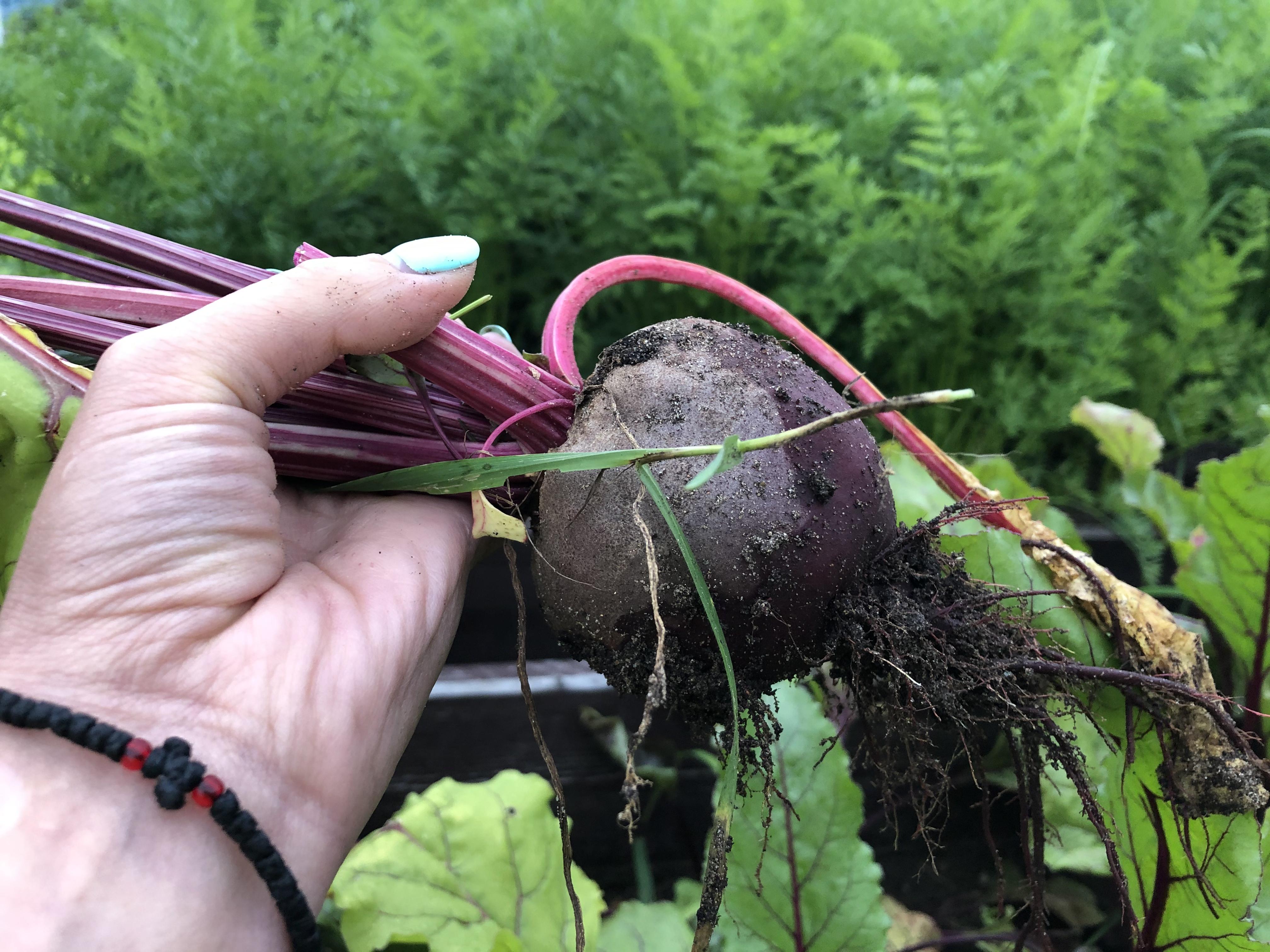 Для садоводов борщ — не деликатес