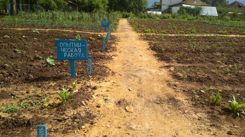 Юные садоводы из села Русский Турек готовятся собирать урожай