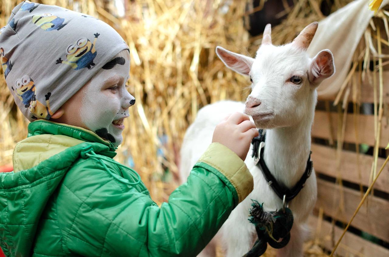 В Кировской области появился первый зоопарк