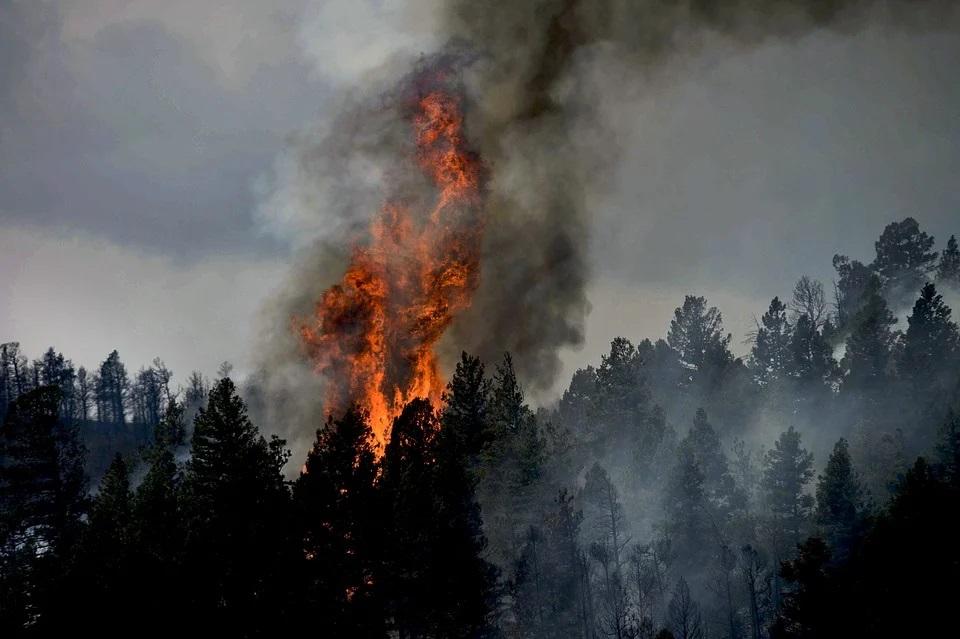 Три района Кировской области охвачены лесными пожарами