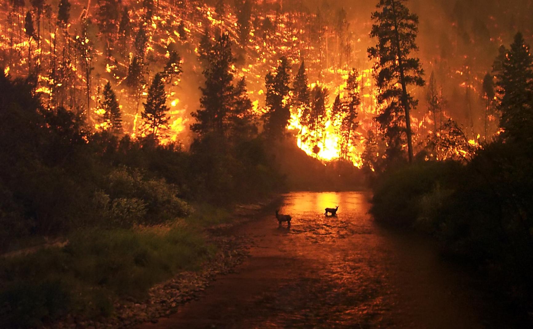 """""""Лесоохрана"""" отчиталась о тушении лесных пожаров на территории области"""