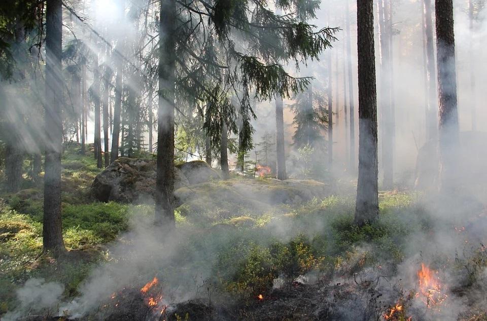 В Кировской области сохраняется высокая пожарная опасность