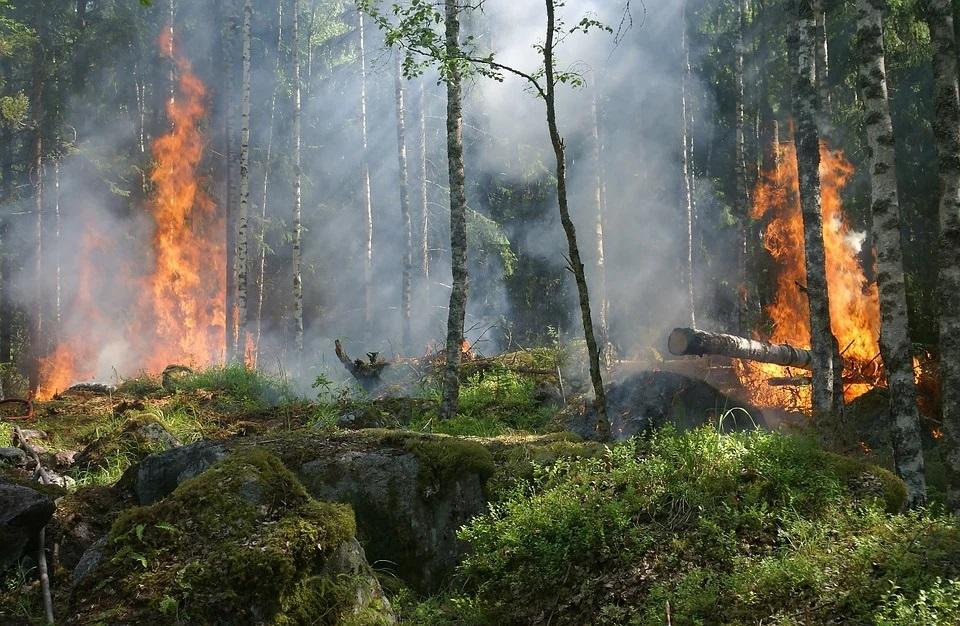 За сутки на территории региона зафиксировано два новых лесных пожара
