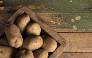 Картофельный урожай под вопросом. Какой будет картошка в российских магазинах в этом году