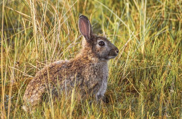 В Кировской области открыт сезон охоты на лису, зайца и енотовидную собаку