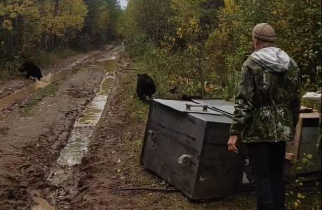 Медвежат-сирот из Кировской области после реабилитации выпустили в дикую природу